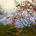 Photos: 秋の夕暮れ