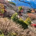 Photos: 寒桜2