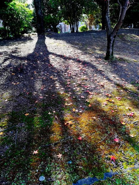 落ち葉の復活