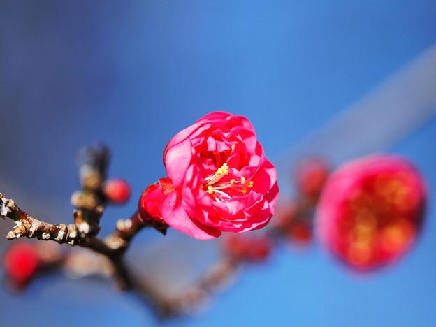 Photos: 春の香り2