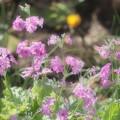 Photos: 春の息吹