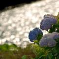 Photos: 午後の日差し