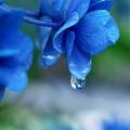 ブルーの涙