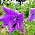 Photos: 蜂とキリギリス