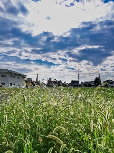 Photos: 梅雨明け2