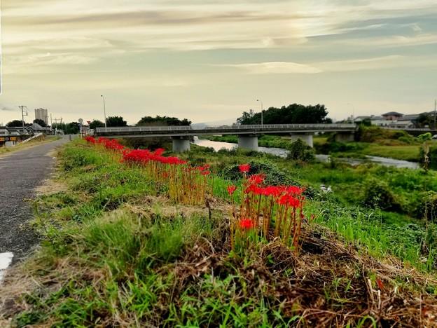 彼岸花の咲く散歩道
