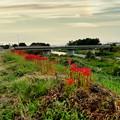 Photos: 彼岸花の咲く散歩道