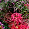 秋の花の競演