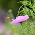 Photos: 花粉まみれ