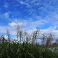 Photos: 秋空に映える