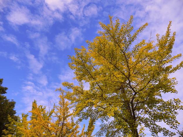 秋空に映える2