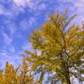 Photos: 秋空に映える2