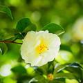 Photos: 日陰でソッと咲く2