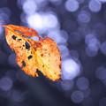 Photos: 虫食いの葉っぱ