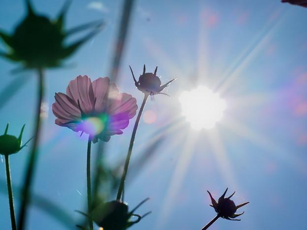 Photos: 太陽に向けたら