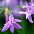 Photos: くさい花