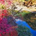 川辺の紅葉2