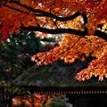 達磨寺の紅葉