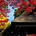達磨寺の紅葉2