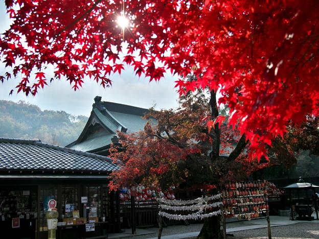 Photos: 達磨寺の紅葉3