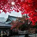 達磨寺の紅葉3