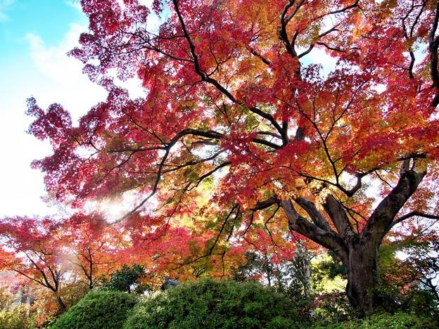 Photos: 達磨寺の紅葉4