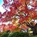 達磨寺の紅葉4