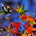 Photos: 色の変遷