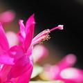 Photos: 日だまりに咲く