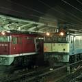 Photos: EF65-1019 EF64-29 急行ちくま  名古屋駅   JR貨物受持ち