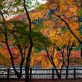 写真: 大威徳寺