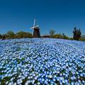 Photos: ブルー