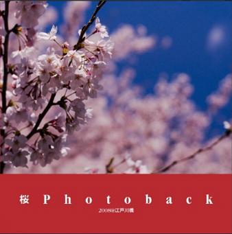 写真: 桜Photoback