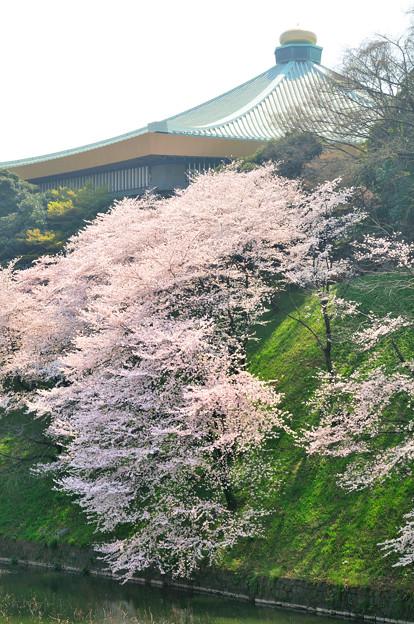 千鳥ヶ淵(日本武道館)