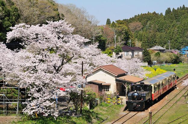 里山トロッコ列車出発