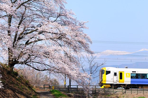 甚六桜とE257系電車