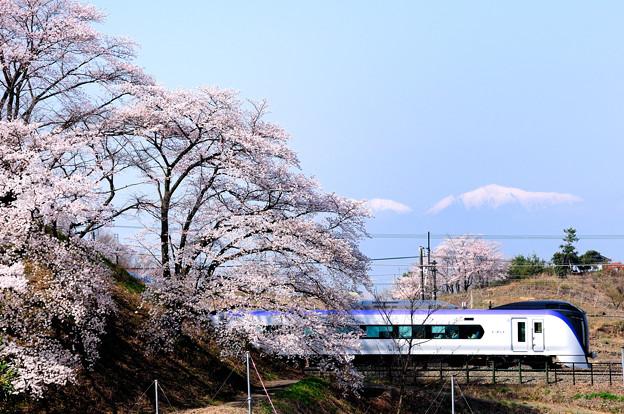 甚六桜とE353系特急スーパーあずさ号