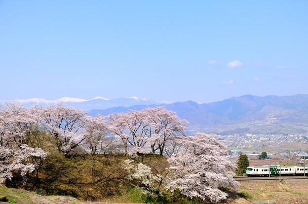 甚六桜と185系特急はまかいじ号