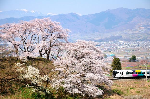 甚六桜とE257系特急あずさ号