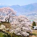 Photos: 甚六桜とE257系特急あずさ号
