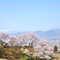 甚六桜とE257系特急電車