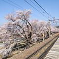 勝沼ぶどう郷駅の満開の桜