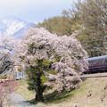 八ヶ岳と桜とお座敷電車