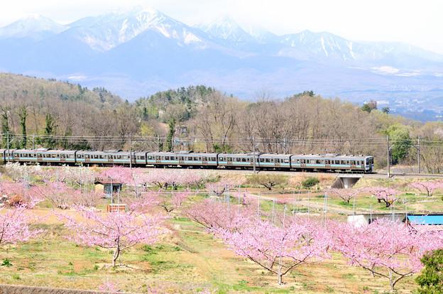 桃の花咲く新府桃源郷を行く211系電車
