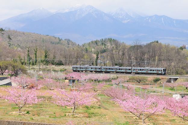 八ヶ岳と桃の花咲く新府桃源郷を走る211系電車