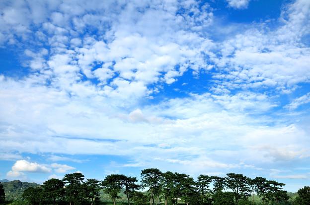 松林とうろこ雲