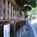 Photos: 垣根と松