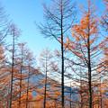 男体山とカラマツ林