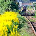 Photos: 黄色い秋