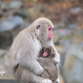 Photos: 猿の親子